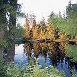 Freshwater fishing at Boardwalk Lodge includes 23 lakes, rivers and streams