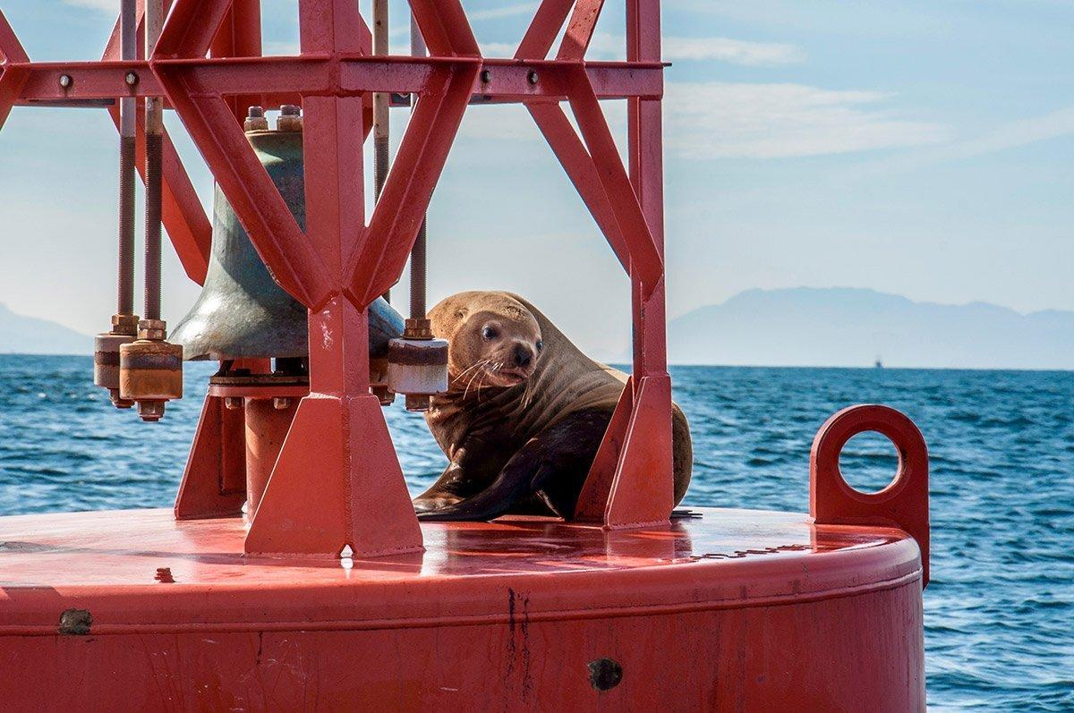 Lone seal suns itself on buoy