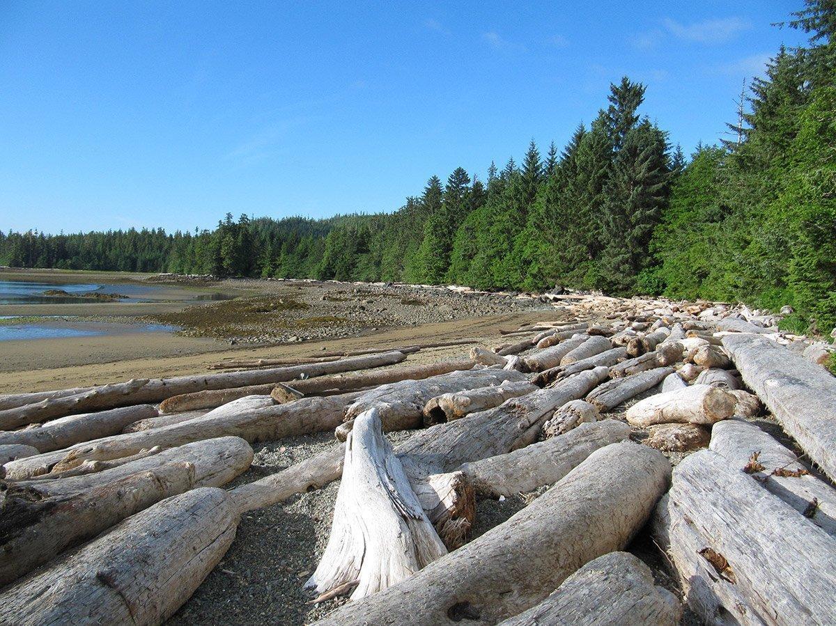 Drift wood on Sandy Beach, Prince of Wales Island, Alaska